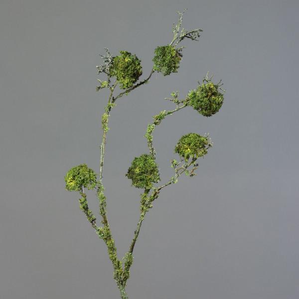 Flechtenzweig (H 103 cm)