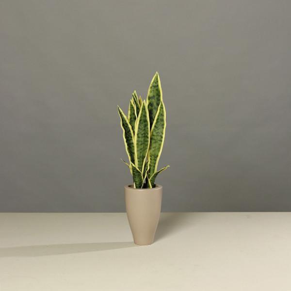 Kunstpflanze Sanseveriaf