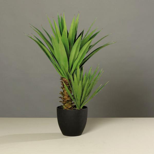 Agave (H 70 cm)